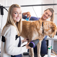 dog grooming education