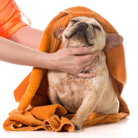 dog grooming in toronto