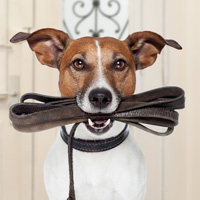 Change behavior with dog obedience training
