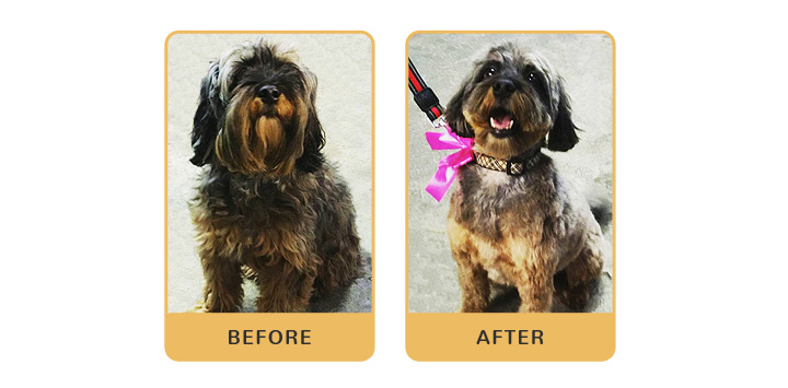 dog before and after grooming from the dog market